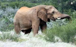Die Parabel von den blinden Männern und dem Elefanten